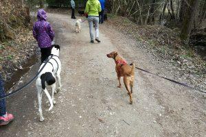 psi na sprehodu