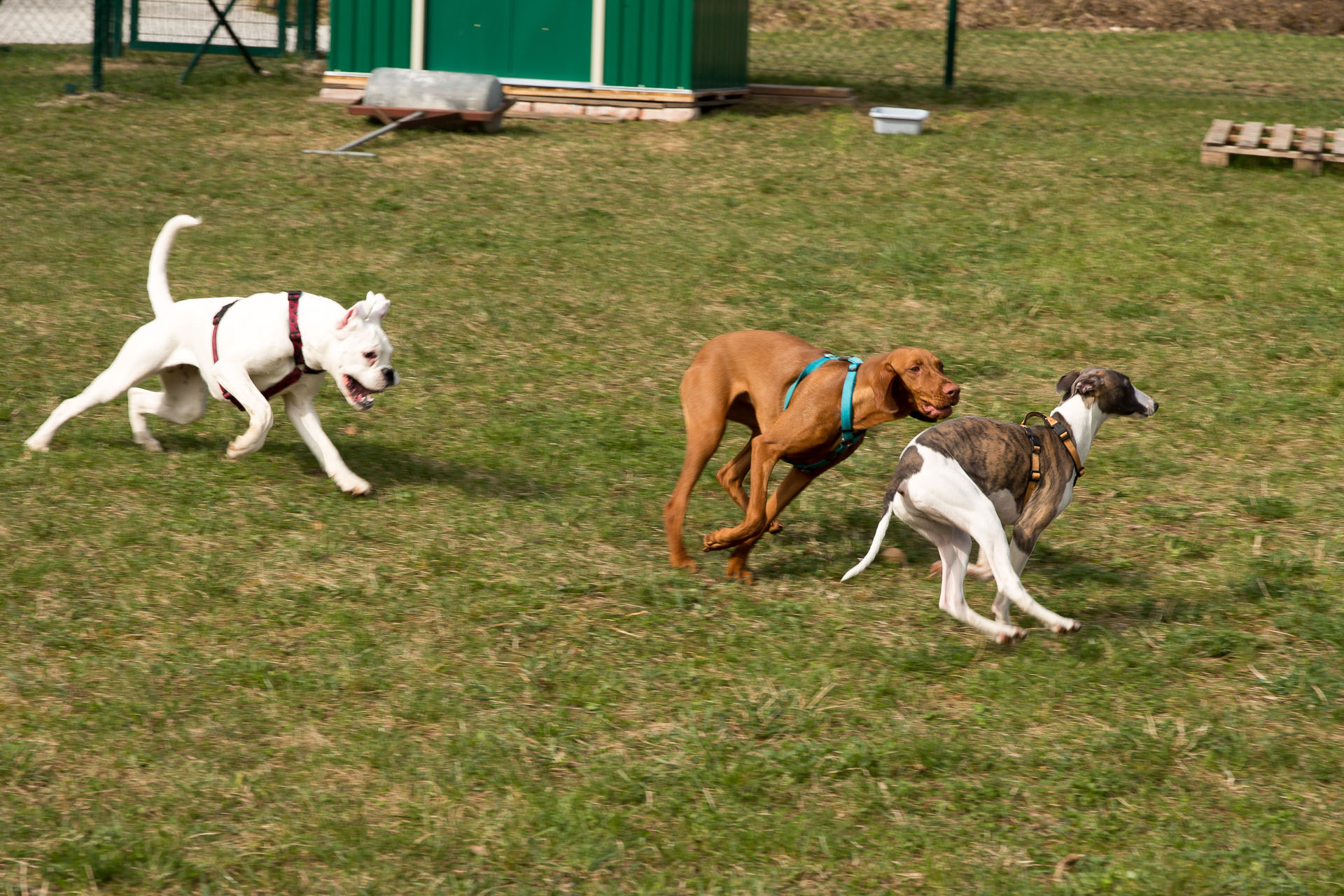 pasja šola igra mladičkov